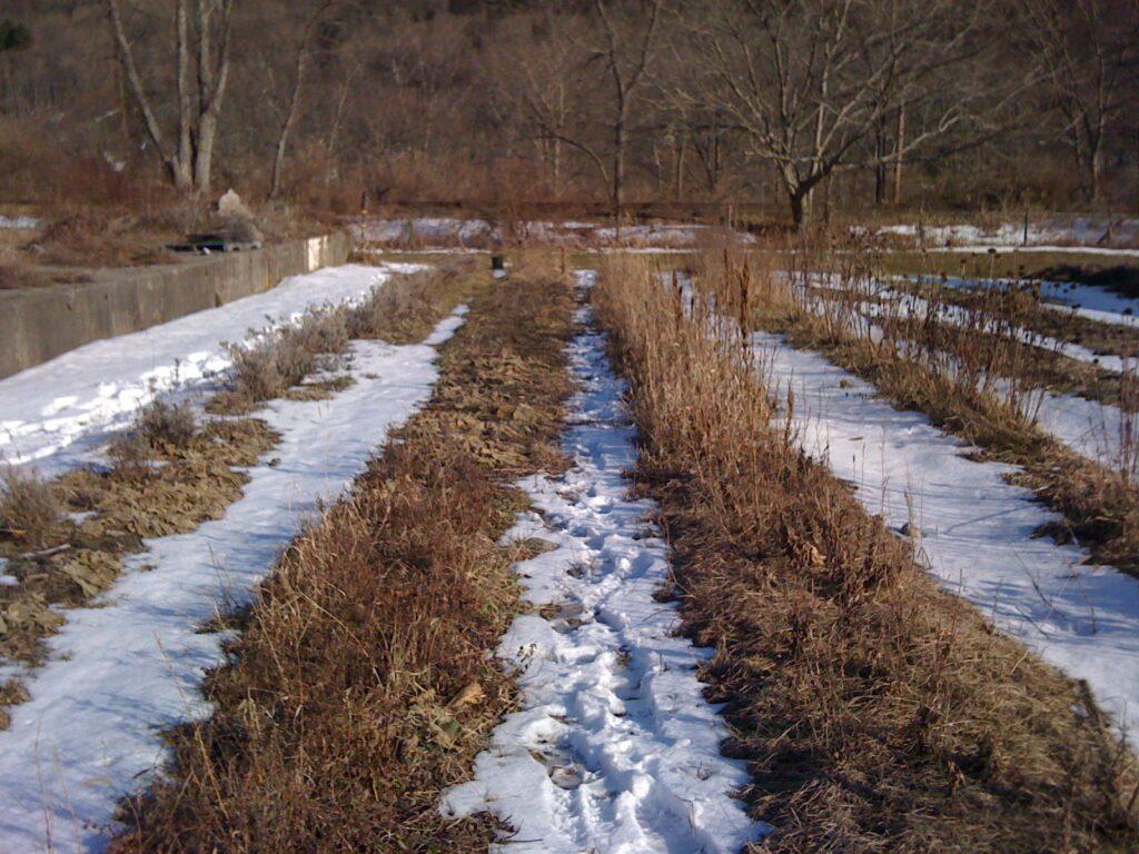 Сад в апреле в снегу
