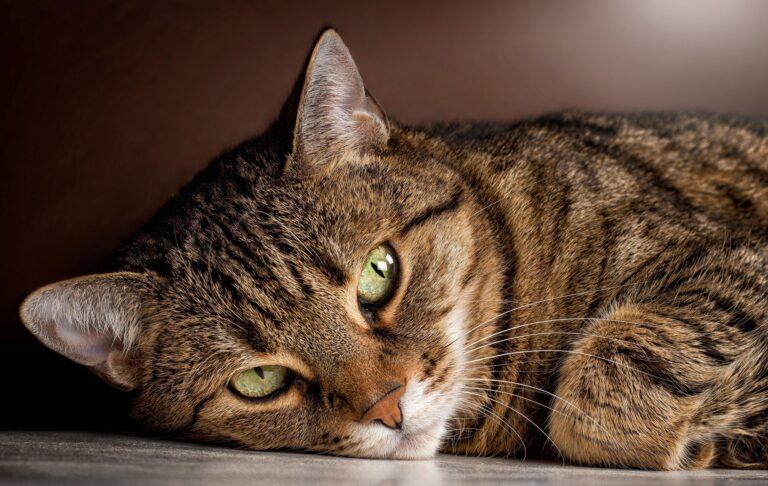 В России коронавирус найден у кошки