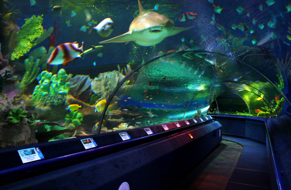 Тоннель в океанариуме Санкт-Петербурга